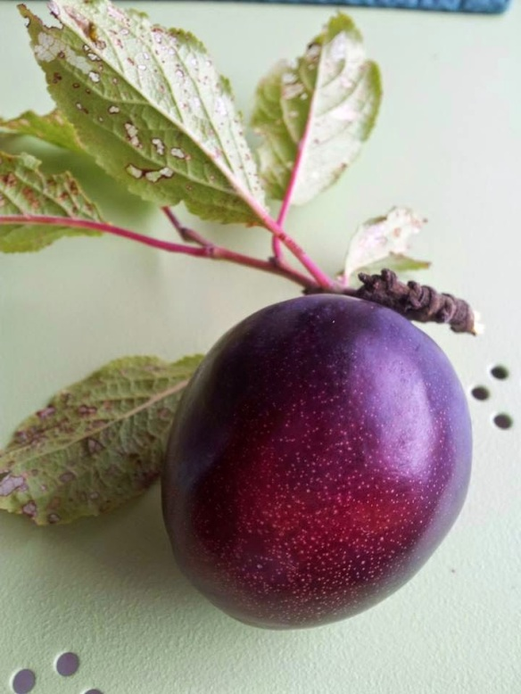 caths-plum The Week That Was
